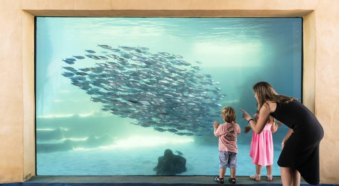 The Aquarium of Western Australia family with school of fish