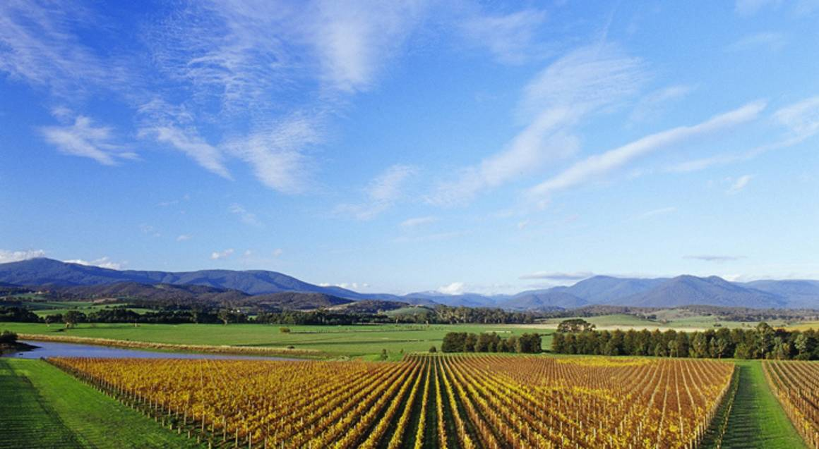 Premium Yarra Valley Wine Tour in Kia Carnival - For 2