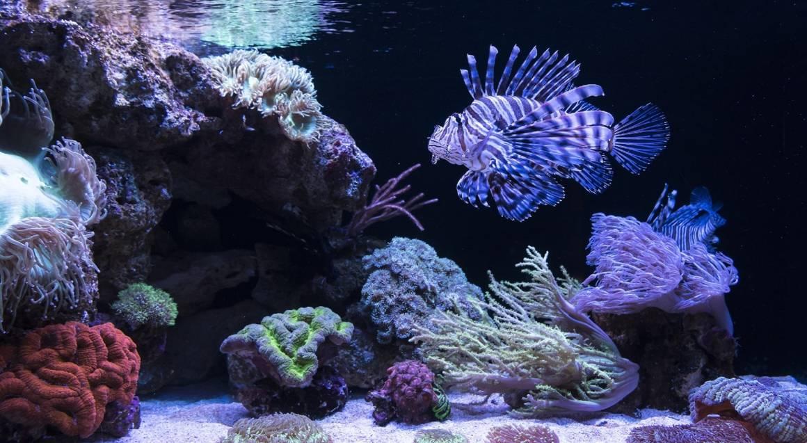 The Aquarium of Western Australia Unlimited Entry Membership