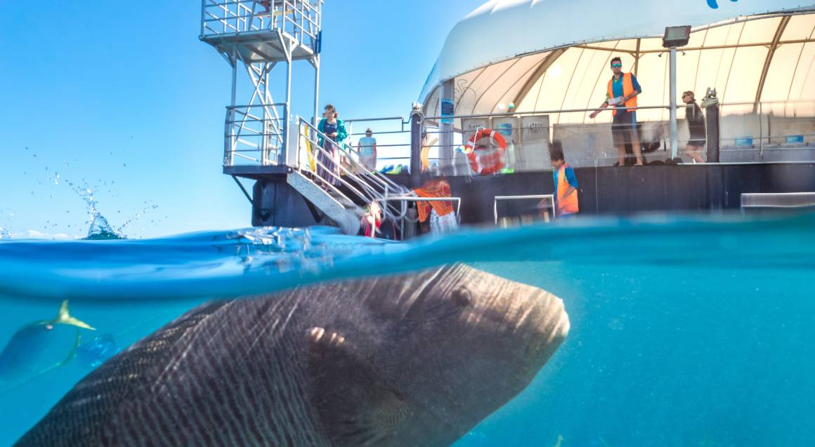 Great Barrier Reef Adventures with Lunch Full Day