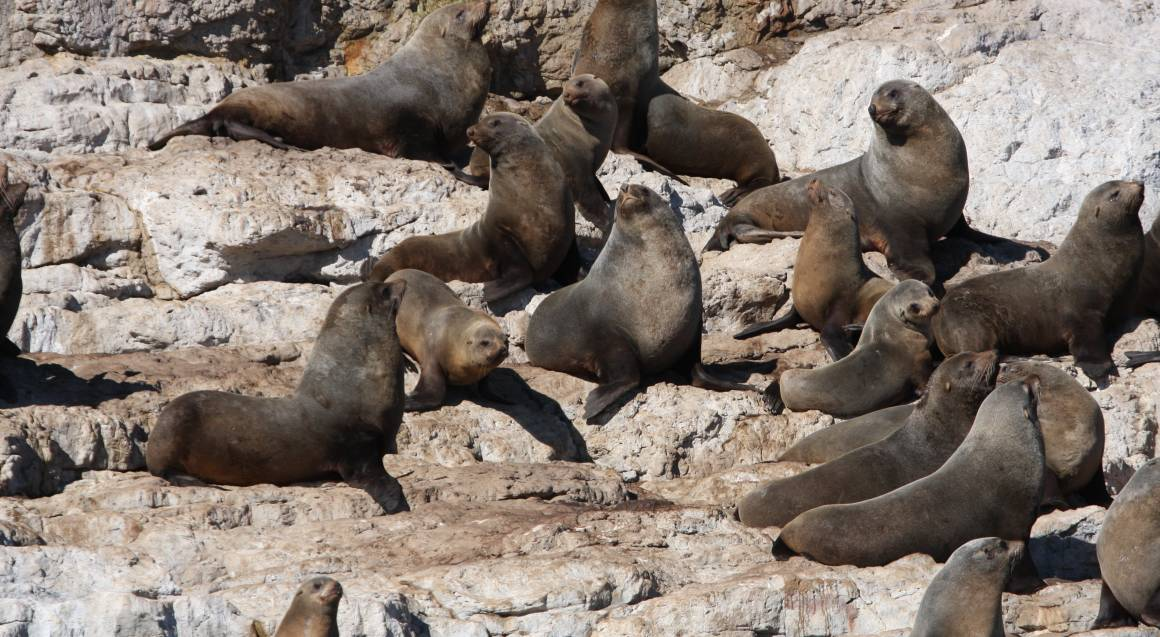 Seal Spotting and Sea Cliff Cruise