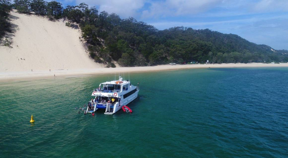 Dolphin Cruise and Snorkeling Adventure - Scarborough