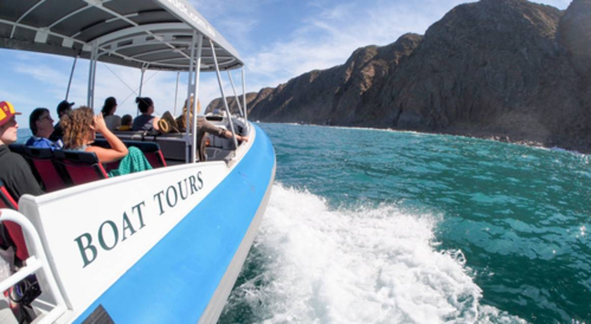 Whale and Wildlife Discovery Tour - 90 Minutes