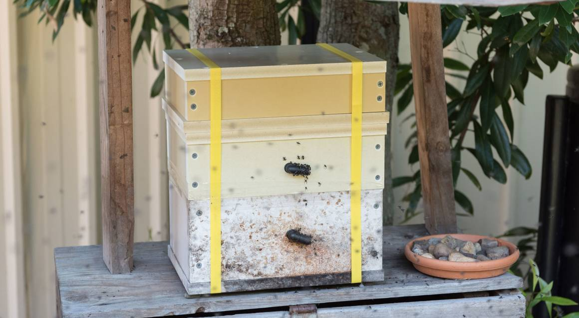 honey pot hive in garden