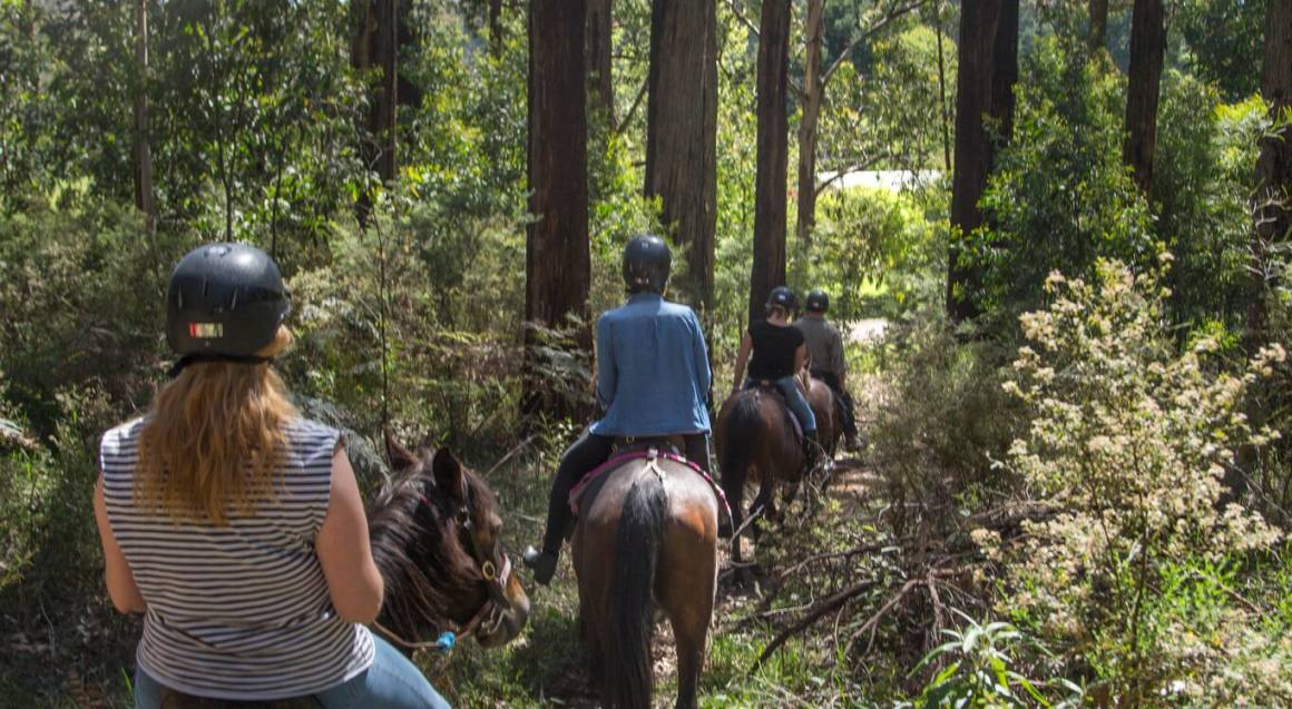 Full Day Yarra Valley Winery Horse Ride