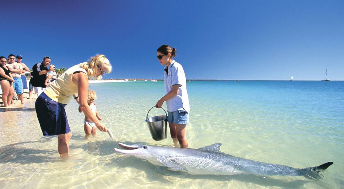 Discovery Tour To Monkey Mia And Shell Beach - For 2
