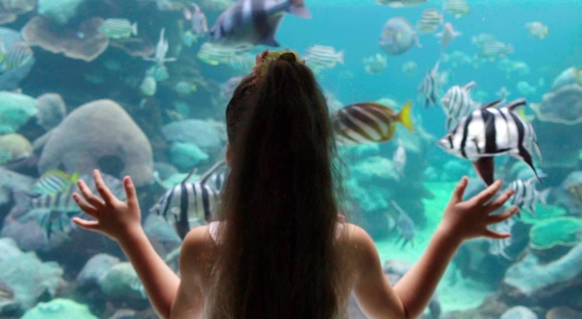 little girl looking at tropical fish in aquarium tank