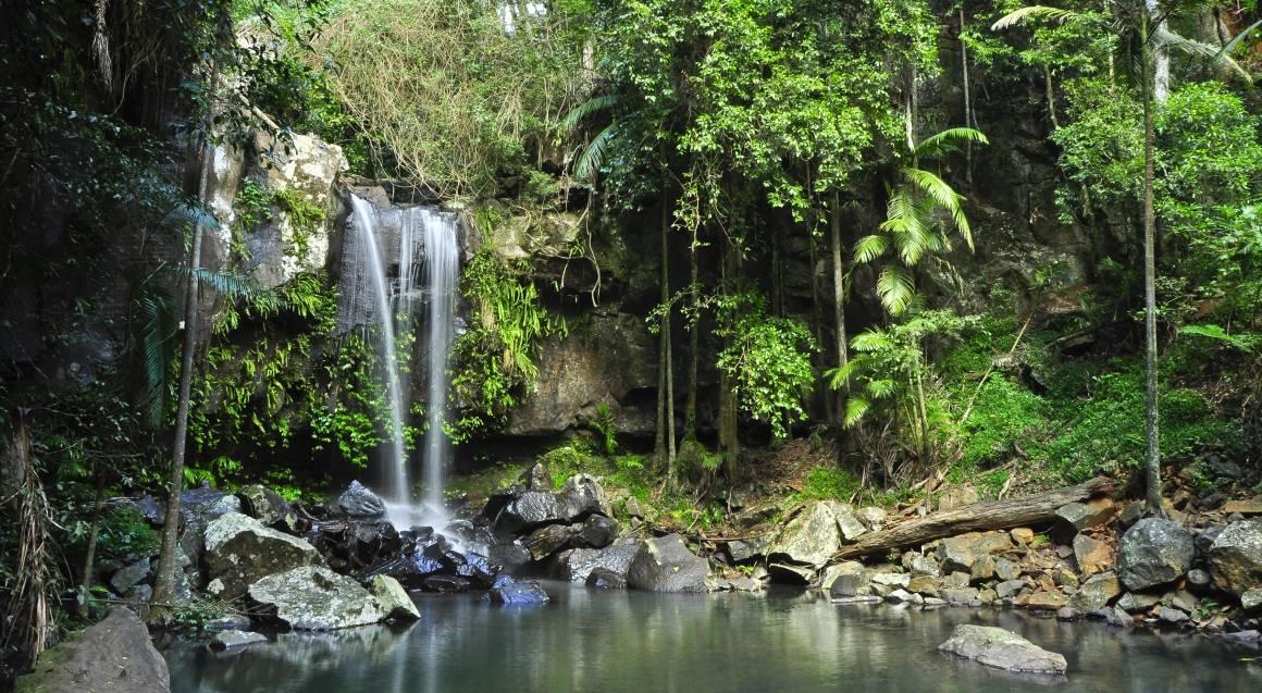 Gold Coast Rainforest and Wildlife Tour - Concession