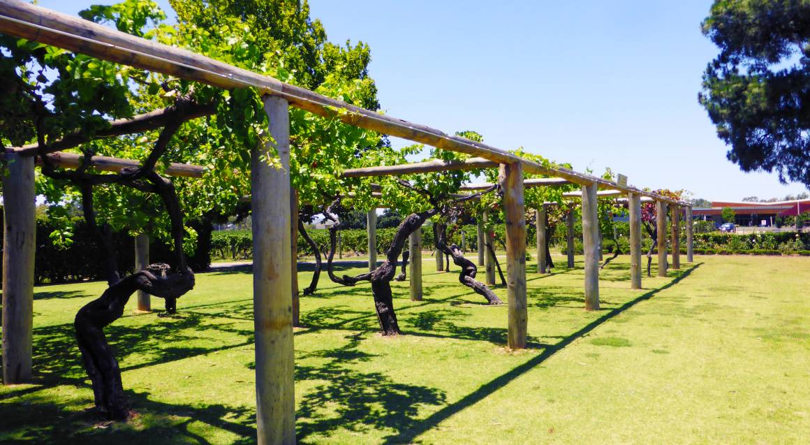 Perth Wine Cruise with Tastings and Winery Lunch - For 2