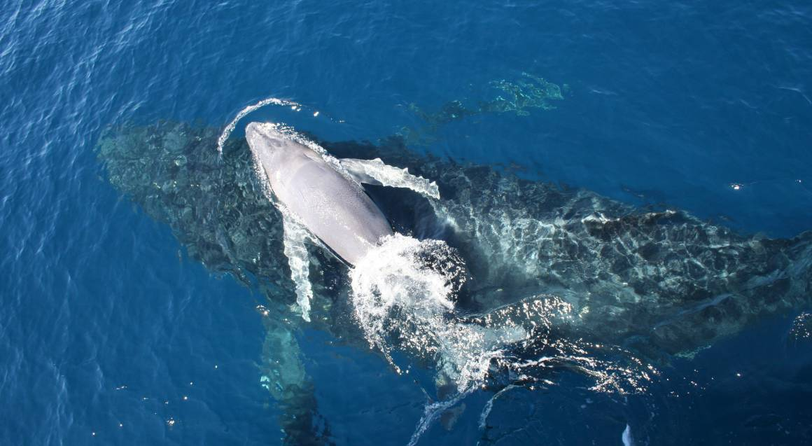 VIP Brisbane Whale Watching Cruise with Transfer