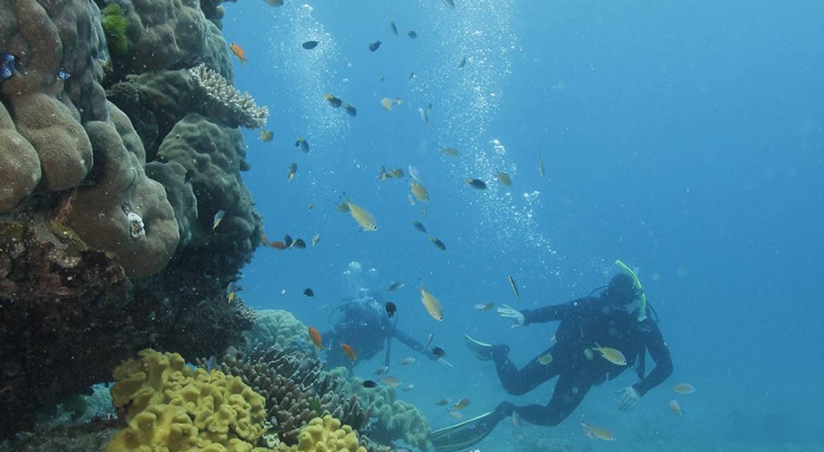 Scuba Diving Great Barrier Reef - Certified - Inc Levy Fee
