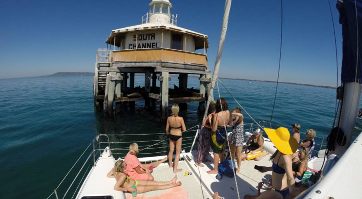 Sailing and Seal Snorkel Tour - Port Phillip Bay - Group