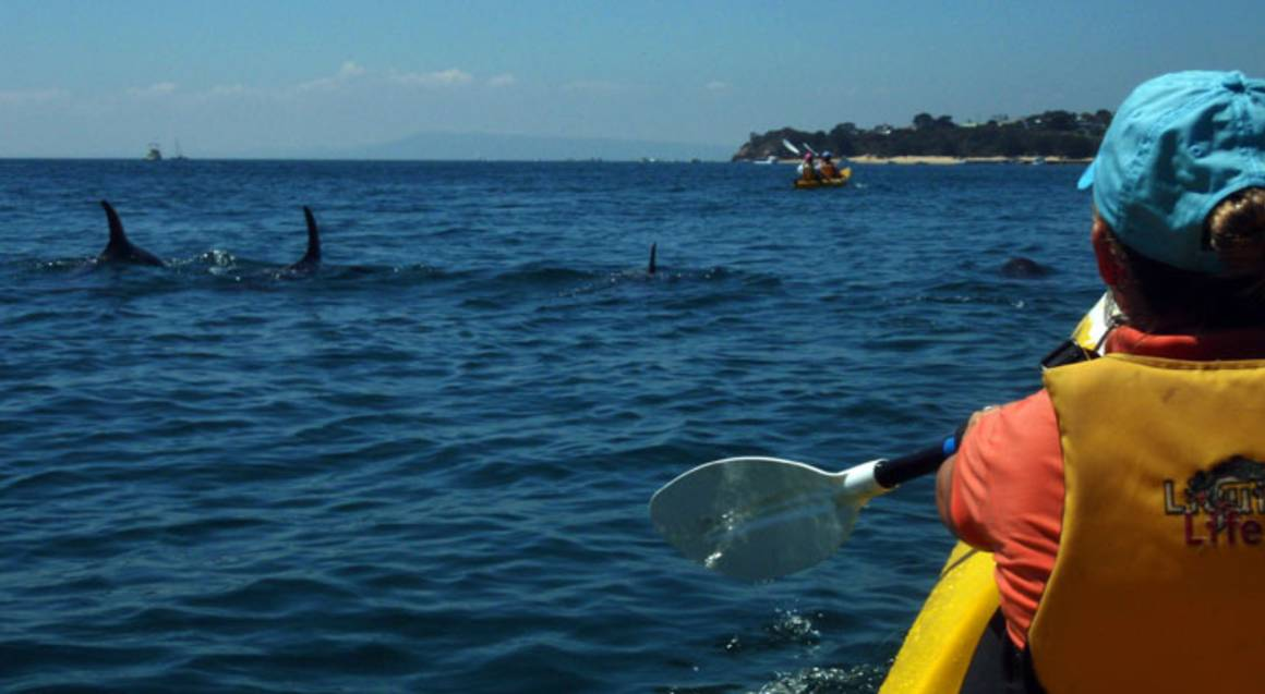 Self Guided Kayaking on the Mornington Peninsula - For 2