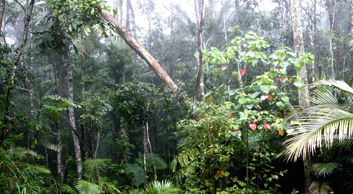 Afternoon and Night Rainforest Wildlife Spotting Tour -Adult