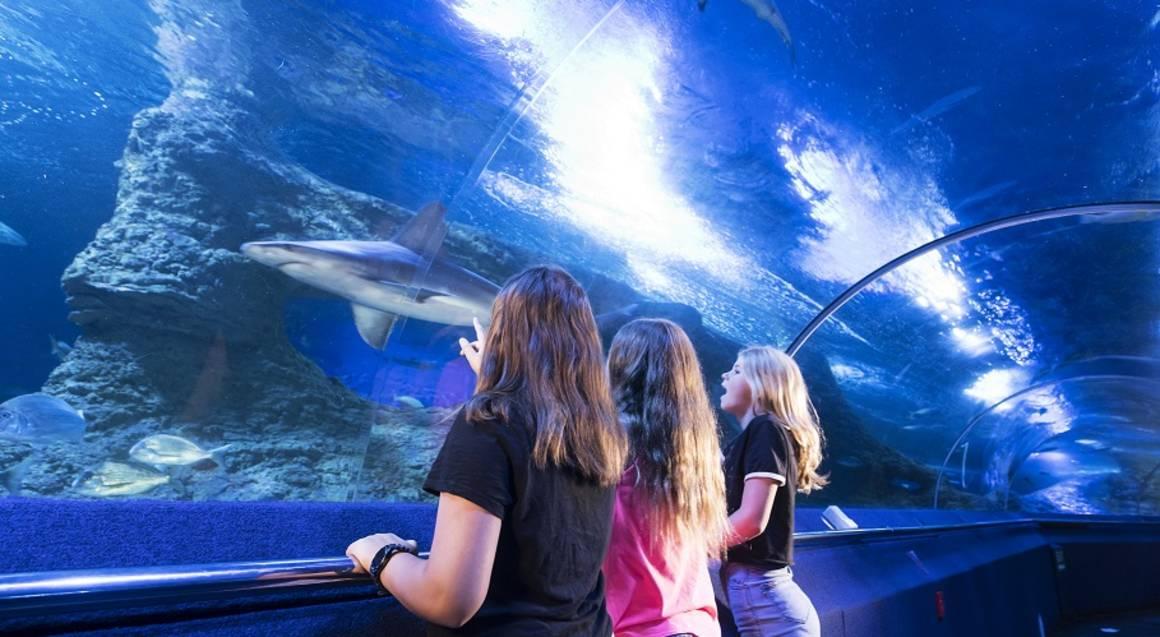 The Aquarium of Western Australia girls near shark in tank