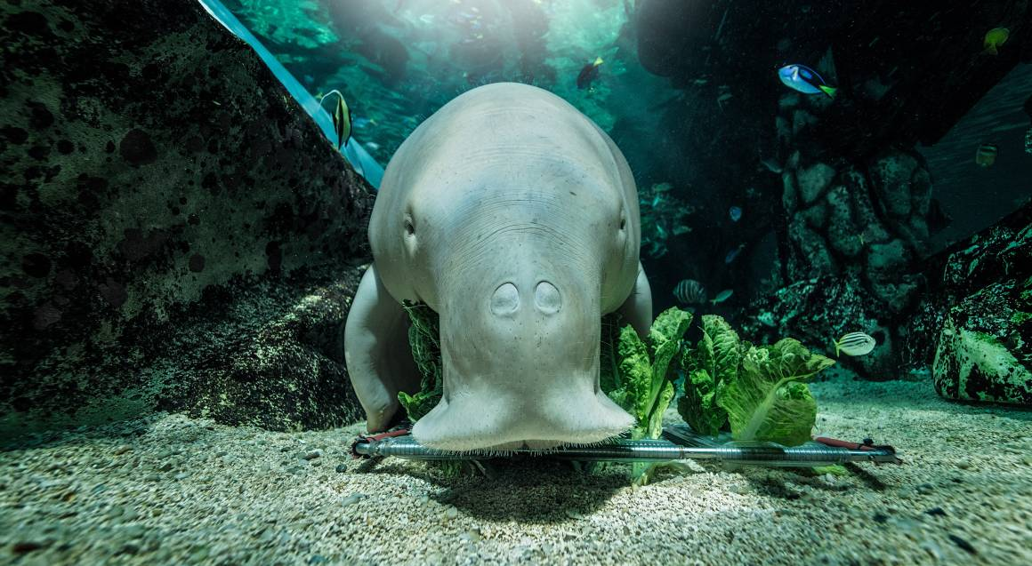SEA LIFE Sydney Aquarium Entry
