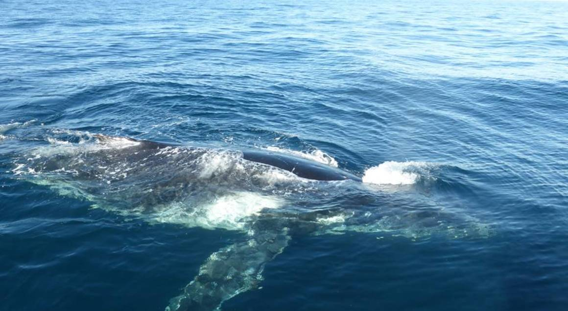 Whale Watching Catamaran Cruise with Lunch