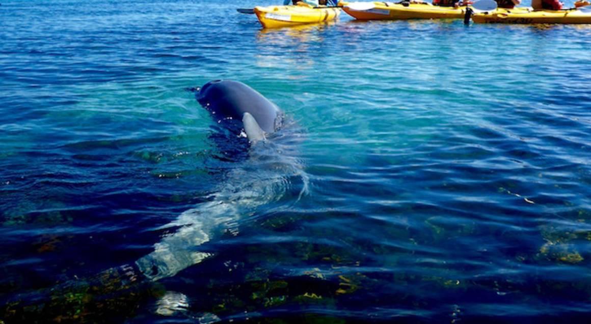 Sea Kayak Tour of Penguin and Seal Island