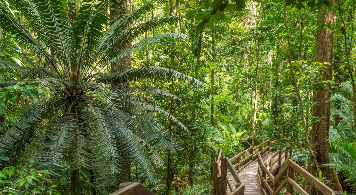 Daintree Adventure Day with Jungle Surfing