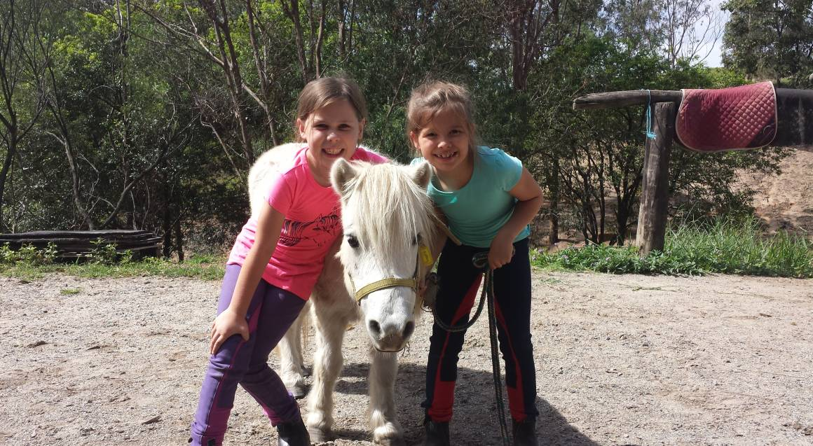 Giddy Up Kids Introduction To Horses