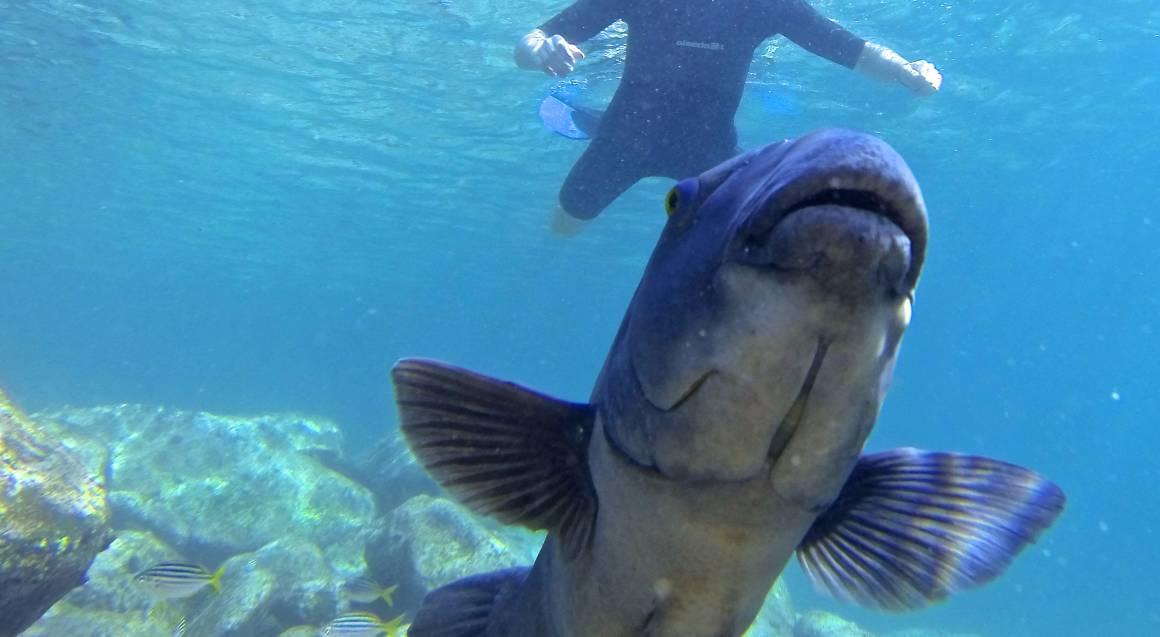 Snorkel and Marine Life Tour - Child