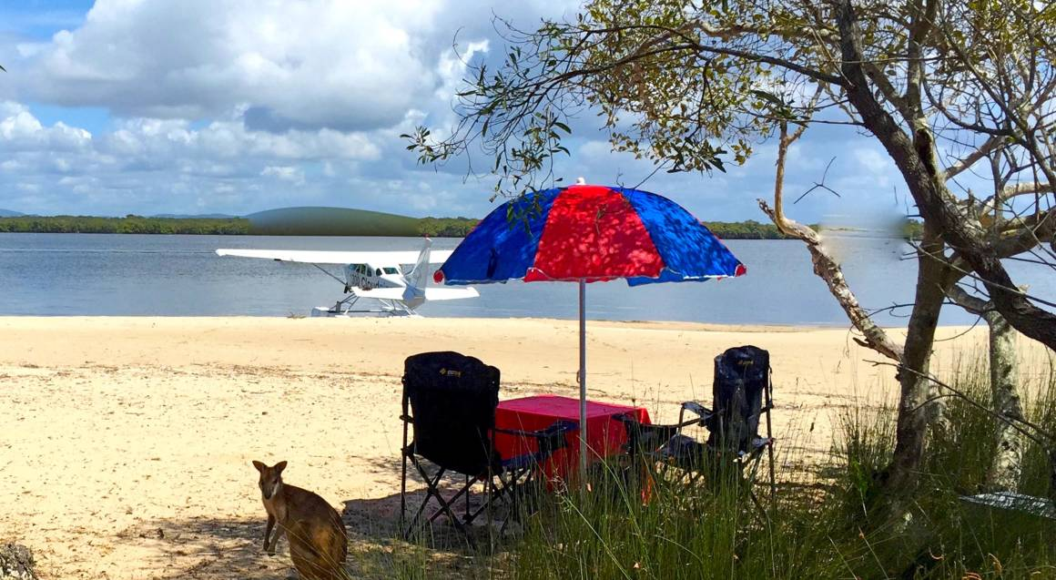 picnic set up stradbroke island with kangaroo on beach