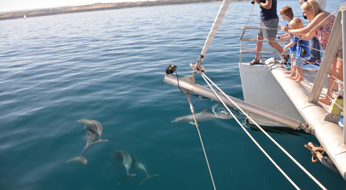 people on board a boat taking photos of dolphins in the water