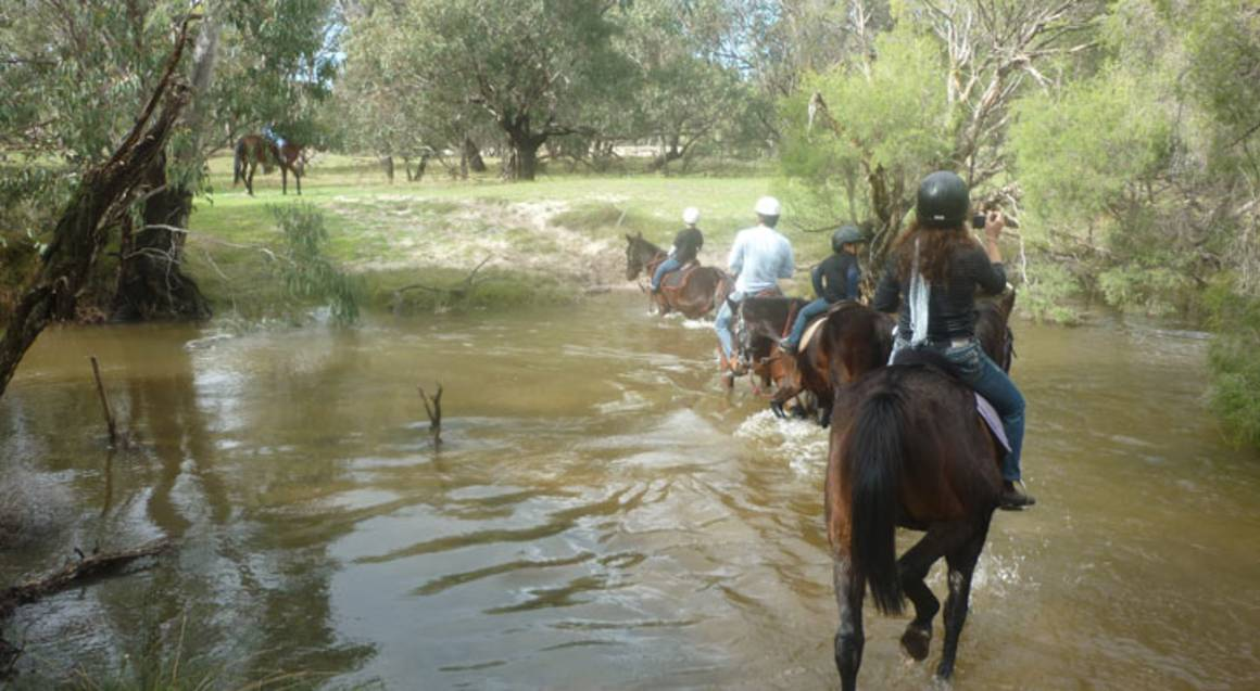 Horse Ride Along the Shoreline of Moore River - 90 Minutes