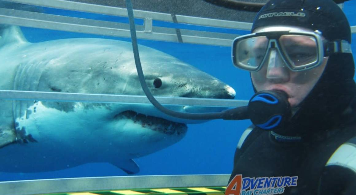 face to face with a shark underwater