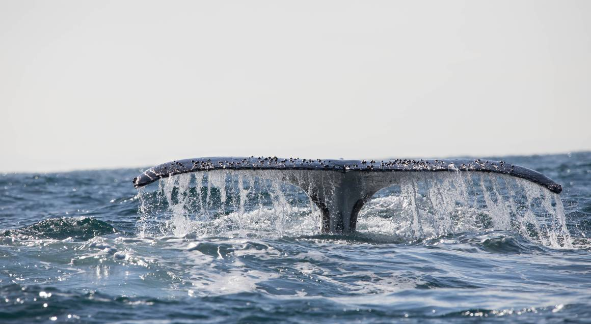Whale Watching Cruise - Newcastle