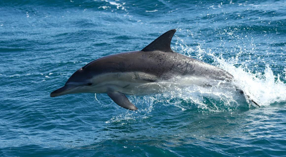 Whale Watching Cruise with Morning Tea and Lunch - 6 Hours