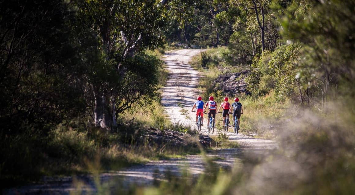 Mountain bike tour the backs of 4 riders on mountain bikes with red helmets on riding up a path in bushland
