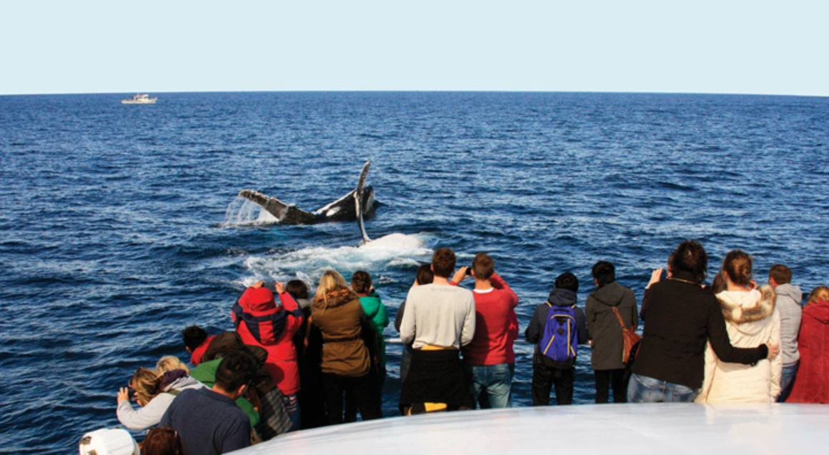 Whale Watching Cruise in Sydney Harbour