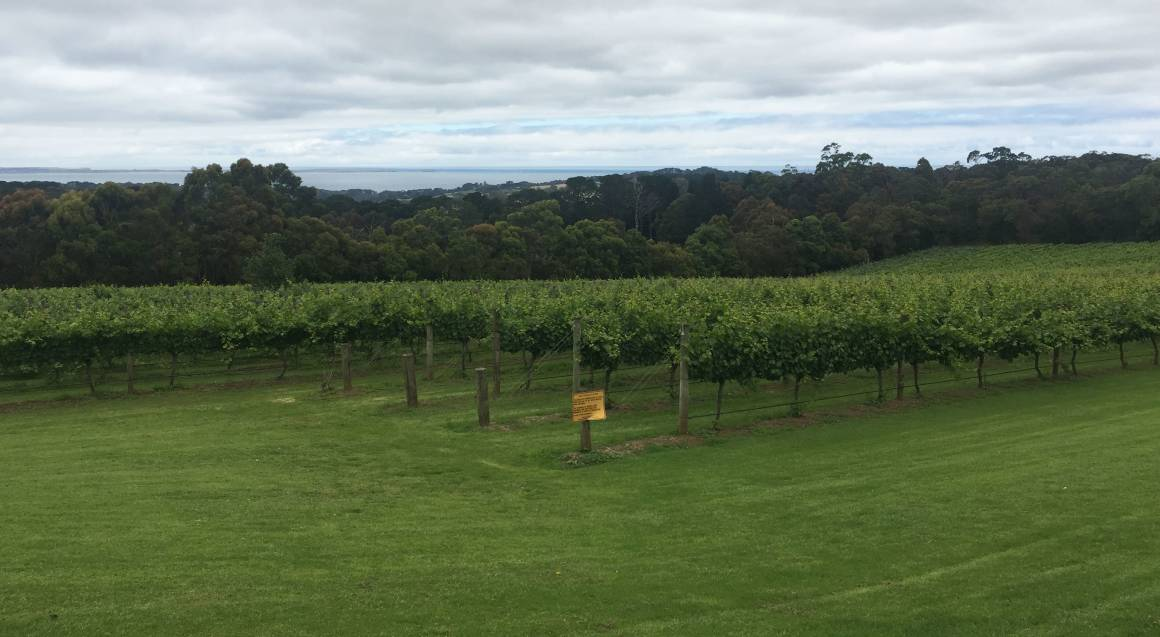 Mornington Peninsula Winery Tour with Lunch and Tastings