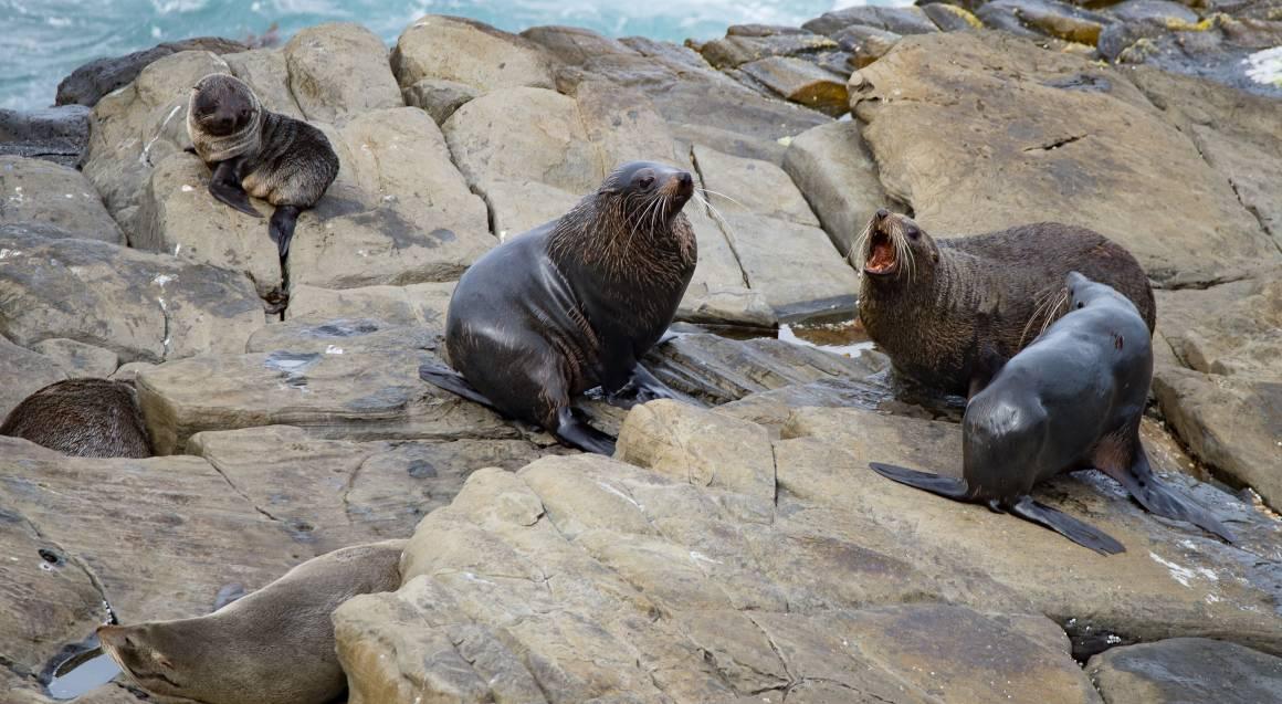 Kangaroo Island Wildlife Discovery Day Tour - For 2