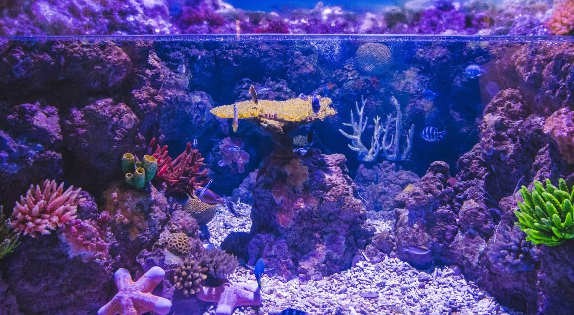 Cairns Aquarium Entry with Souvenir Photograph