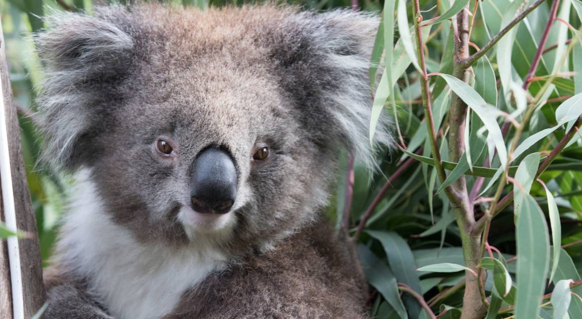 Roar 'n' Snore - Sleepover at Melbourne Zoo - For 2