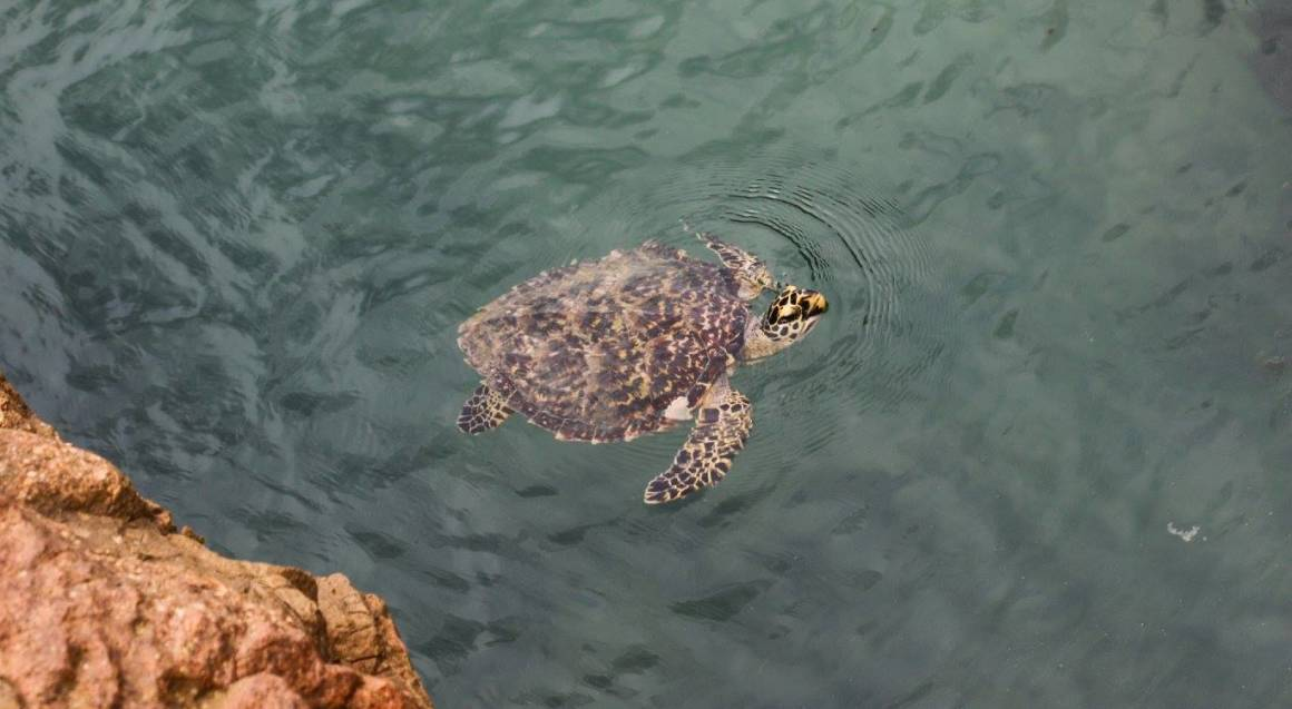 turtle swimming in the water