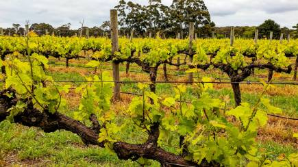 RedBalloon Margaret River Wine Tasting Tour with Lunch - Full Day