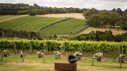 RedBalloon Mornington Peninsula Guided Wine Tasting with Lunch - For 2