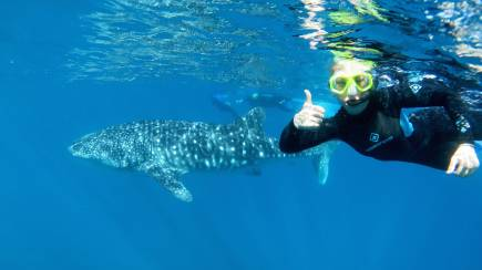 RedBalloon Whale Shark Swim and Snorkel Tour with Lunch and Photos