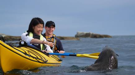 RedBalloon Sea Kayak with Fur Seals - For 2