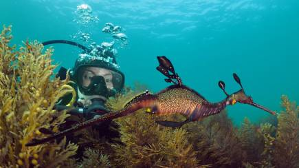 RedBalloon Scuba Diving with Sea Dragons - Non Certified Divers
