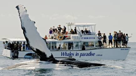 RedBalloon Whale Watching Cruise - Surfers Paradise