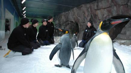RedBalloon Penguin Discovery at Kelly Tarlton's Aquarium - Adult