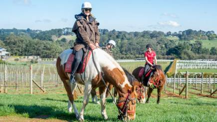 RedBalloon Horseback Winery Tour - 3 Hours