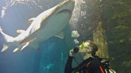 RedBalloon Shark Dive at SEA LIFE Sydney Aquarium with Bonus Tickets