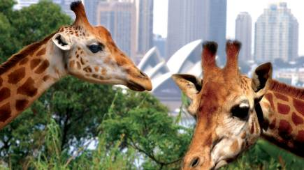 RedBalloon Sydney Harbour Cruise with Taronga Zoo Entry - Family