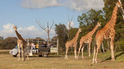 RedBalloon Overnight Zoo Safari With Dinner and Breakfast - For 2
