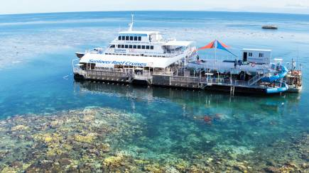 RedBalloon Great Barrier Reef Cruise with Lunch and Snorkelling - Adult